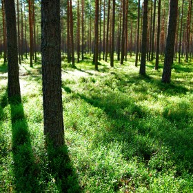 5 genius energy lessons we can learn from Sweden