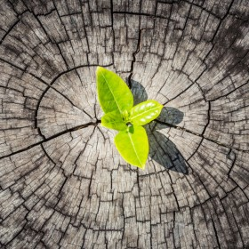 5 successful green businesses