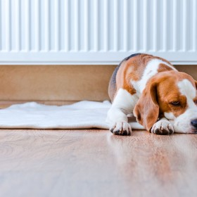 Buying a new heater? Here's our Winter Heating Guide